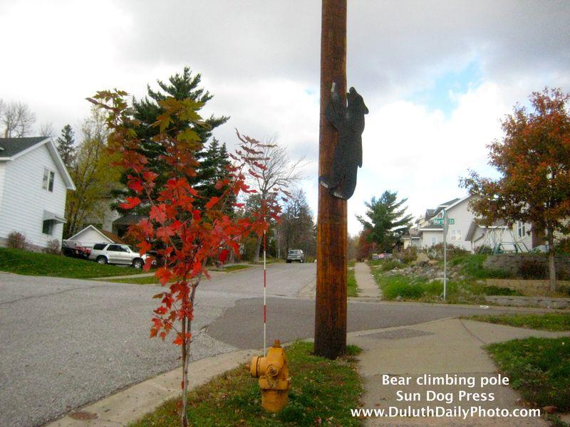 10 10 18 bear climbing pole IMG_5183